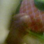 Рисунок профиля (Никита)